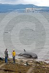 IC_Cromarty_Whales_05.jpg