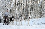 sled_dog_competition_02.JPG