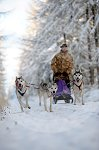 sled_dog_competition_04.JPG