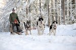 sled_dog_competition_05.JPG