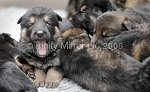 TR220908PUPS-3.jpg
