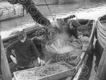 c9029 shrimps being steamed.jpg