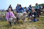 Campsie Show commercial sheep.JPG