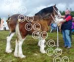 Mid Argyll Clyde and foal.jpg