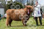 BEITH-HighlanderGlasCouncilshowChampion-.JPG