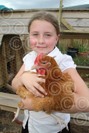 8798 your chickens.jpg