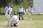 P7365-33-09SH BS Cricket.jpg