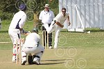 P7433-33-09SH BS Cricket.jpg