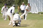 P7434-33-09SH BS Cricket.jpg