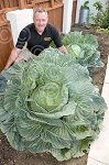 6ftWideCabbage-1of5 charrich Sep15.jpg