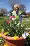 exb 0887-18-13AW Budleigh in Bloom.jpg