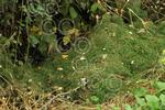 mhc 2740-44-15AW Grass in hedge.jpg