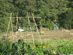jppp-02-01-13 pet-adhurst allotments 48.JPG