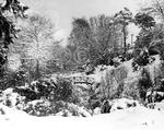 A beautiful snowy scene captured in Johnston Gardens in