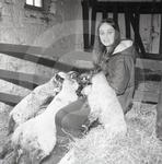 70 836 Janice Fell with pet lambs Scotby 1970 nostalgia.jpg