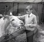 69 2084 Bill the donkey who had retired from giving rid