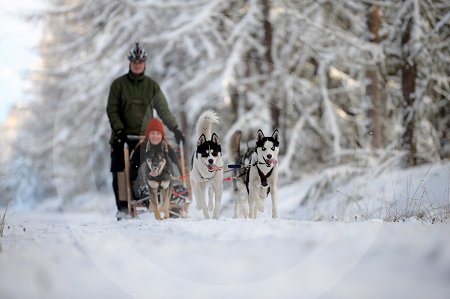 sled_dog_competition_06.JPG