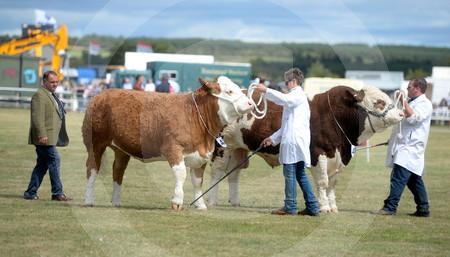 Black Isle Show day 2018 05.JPG
