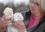 IC_Baby_Barn_Owls_04.jpg