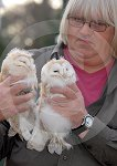 IC_Baby_Barn_Owls_05.jpg