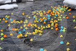 IC_drumnadrochit_duck_race_35.jpg