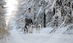 sled_dog_competition_03.JPG