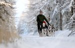 sled_dog_competition_07.JPG