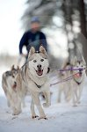 sled_dog_competition_08.JPG