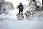 sled_dog_competition_09.JPG