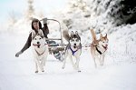 sled_dog_competition_10.JPG