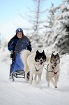 sled_dog_competition_11.JPG