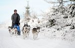 sled_dog_competition_13.JPG