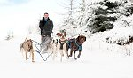 sled_dog_competition_14.JPG