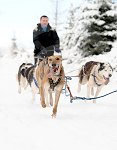 sled_dog_competition_15.JPG