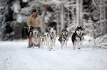 sled_dog_competition_18.JPG