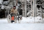 sled_dog_competition_19.JPG