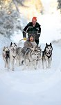 sled_dog_competition_20.JPG