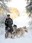 sled_dog_competition_22.JPG