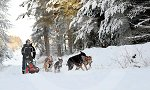 sled_dog_competition_25.JPG