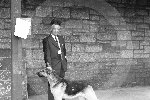 Elgin Dog Show406.jpg