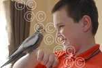 201101M Lewis Hodgetts and Cookie the Cockatiel.jpg