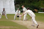 251139LA Lye v Alvechurch cricket.jpg
