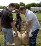News - North Lonsdale Show 001.JPG