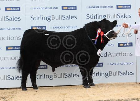 STIRLINGangus6000BruceLot28.jpg