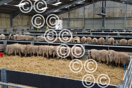 NEWTONRIGG-sheepShed-ShedView-.JPG