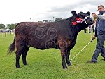 WIGTOWNshowGalloway(2)Wallace.jpg