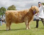 BIGGARhighlandHunter.jpg