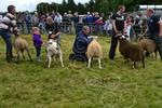 M Argyll i-breed judging.JPG