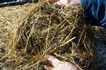 WHITMUIRHAUGH-SILAGE.JPG