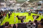 AGRISCOT-CrowdRing.JPG